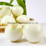 Fresh White Skin Onion with Good Price and Quality