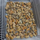 Shellfish Frozen Cooked Mussel Meat on Sale