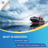 Freight Forwarder From Qingdao to Hamburg/Bremerhaven Germany