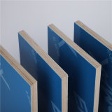 Green/Blue/Red PP Plastic Film Faced / Ply Wood / Marine Plywood Cheap