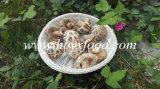 White Flower Mushroom Export Products of Singapore
