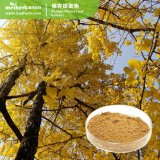 Factory Supply Plant Extract Ginkgo Biloba Extract CAS No. 90045-36-6