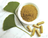 E. P. Total Flavone Glycosides 22%-27%, Ginkgo Biloba Extract, Plant Extract