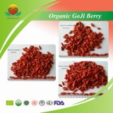 Manufacture Supply Organic Goji Berry