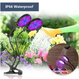 Recruitment Distributor IP66 High Power LED Desk Clip Lighting Garden Grow Light