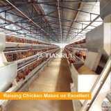 Poultry equipment price poultry cage 5 layer chicken farm