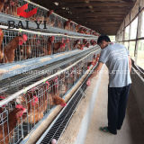 Best Price Automatic Poultry Farm Equipment Poultry Chicken Cage for Turkey Farm Project Design