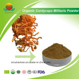 Manufacturer Supplier Organic Cordyceps Militaris Powder