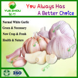2019 Top Sale 5-6 Cm Cheap Normal White Garlic with High Quality