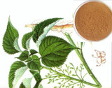 High Quality Plant Extract /Fruits Extract Nettle Powder