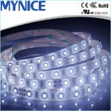 Wholesale 2835 60LED 12V LED Strip Lamp