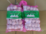 Factory Supply High Quality Fresh Natural Garlic Price for Sale!
