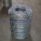 Hot DIP Galvanized Barbed Wire for Airport Prison Security Fence