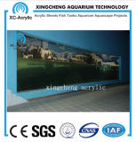 Customized Transparent Acrylic Aquarium Supplier