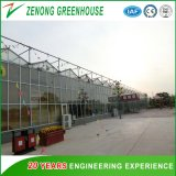 Holland Type Pitch Top Double Glass Greenhouse for Botanical Garden/Eco-Tourism
