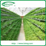 Advanced commercial hydroponics system from China supplies