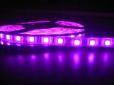 5050 Pink LED Strip Light with Most Competitive Price