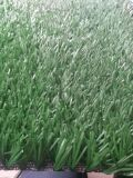 Best Price for Good Quality decoration Artificial Grass Carpet