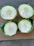 Best Price High Quality Chinese Mesh Bag Carton Fresh Long Green White Cabbage