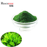 Super Food Halal Chlorella Extract Pure Natural Chlorella Powder in Bulk