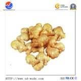 2017 Chinese New Crop Wholesale State Owned Fresh/Dried Ginger