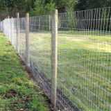 Galvanized Knot Fixed Field /Wire Mesh / Netting Deer Fence