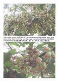 Unigrow Plant Growth for Any Fruit Planting