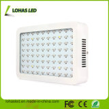 800W LED Plant Light 80X10 Double Chips Full Spectrum Grow Light for Hydroponics