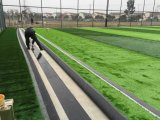 Manufacture Price Artificial Grass Carpet and Colorful Artificial Turf for Football Field