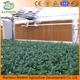 Evaporative Water Pad with Ce Certificate Good Price