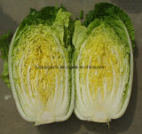 New Crop Fresh Vegetable- Chinese Cabbage