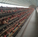 Automatic Battery Egg Hens Poultry equipment Chicken Layer Cage