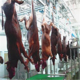 Cattle Slaughter and Proccess Production Line/ Ox Veal Beaf Processing Plant Equipment