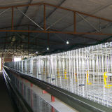 Best Price Automatic Layer Chicken Cage for Sale