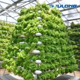 Agricultural Greenhouses Supplier Vertical Planting Vegetables Tomato Hydroponic Lettuce Grow Tent Tunnel Multi Span Plastic Film Greenhouse for Sale