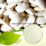 Kosher White Kidney Bean Extract 5% Phaseolin Powder
