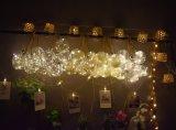 LED String Light &Plastic Bulbs with Dried Flower LED Light Festival Lamp