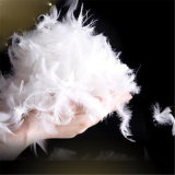 2-4cm Washed White Duck Feathers