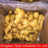 China Manufacturer Ginger and Garlic Export Company Manufactory Wholesale