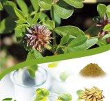 Licorice Root Extract (Glycyrrhizin)