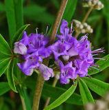 Plant Extract, 10: 1, Chasteberry Extract, Vitex Agnus-Castus Extract