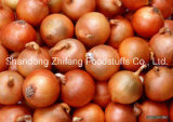 New Crop Chinese Yellow Onion