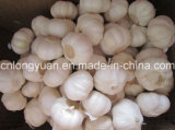 Chinese White Garlic with Carton Packing