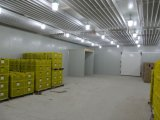 The Cold Storage Room for Food Preservation