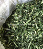 Rabbit Foods Pet Foods Barley Grass for Animal