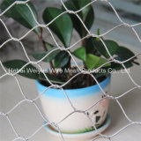 Decorative Protection Stainless Steel Wire Rope Mesh
