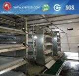 Poultry Farming Cages Equipment Made in China