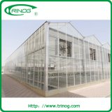 Highly strong glass greenhouse with butterfly vent