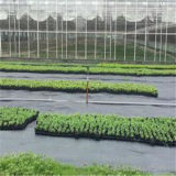 Top Quality Cheapest Price Polypropylene Non Woven Fabric/ Weed Control Plant Cover Factory