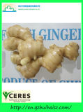 Fresh Air-Dry Ginger (100G+, 150G, 200G+, 250G+)